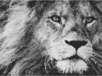 Vorlage für Ministeck Lion 80x60cm schwarz/weiß als Entwurfdruck