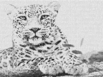 Vorlage für Ministeck Leopard 80x60cm schwarz/weiß als Entwurfdruck
