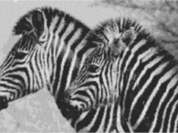 Vorlage für Ministeck Zebra1 100x60cm schwarz/weiß als Entwurfdruck