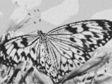 Vorlage für Ministeck Butterfly2 80x60cm schwarz/weiß als Entwurfdruck