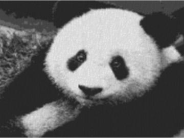 Vorlage für Ministeck Panda 80x60cm schwarz/weiß als Volldruck