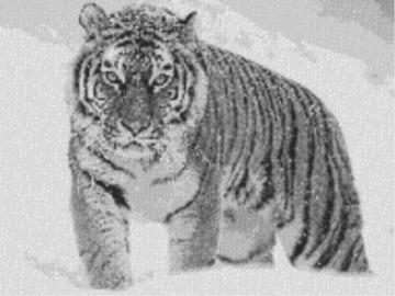 Vorlage für Ministeck Tiger im Schnee 80x60cm schwarz/weiß als Entwurfdruck